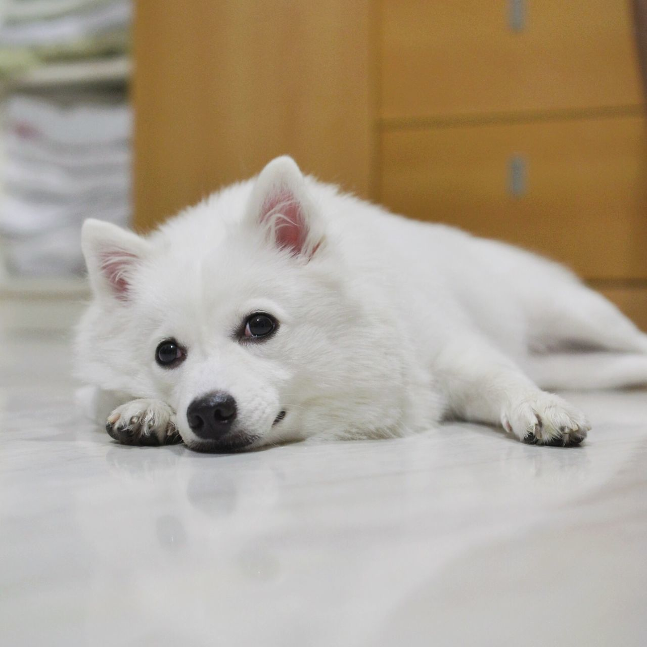 Beautiful stock photos of pets, Close Up, Color Image, Cute, Day