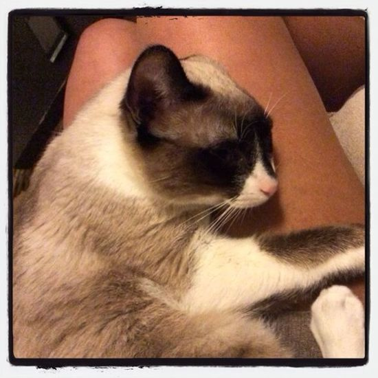 The Cat Bé!!! Beautiful ♥ Enjoying Life Escaping Relaxing