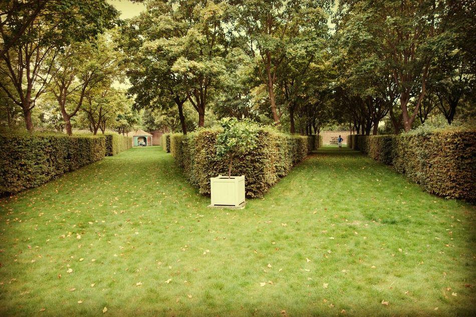 The Road Not Taken - Robert Frost England Hamhouse Yellow Wood