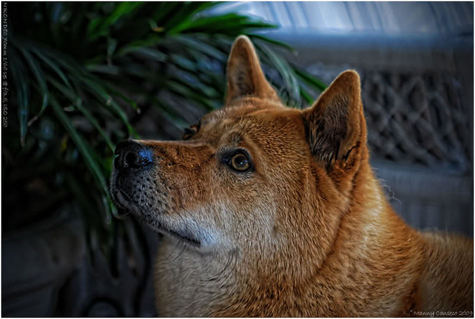 Alertness Animal Animal Head  Animal Themes Animals In The Wild Brown Curiosity Dog Domestic Animals Home Mammal One Animal Pets Relaxation Relaxing Side View Wildlife Zoology