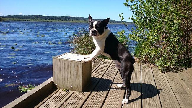 Dogs Dogslife Relaxing Cheese! Hello World Enjoying Life EyeEm Nature Lover Nature_collection Lake Eyemdog