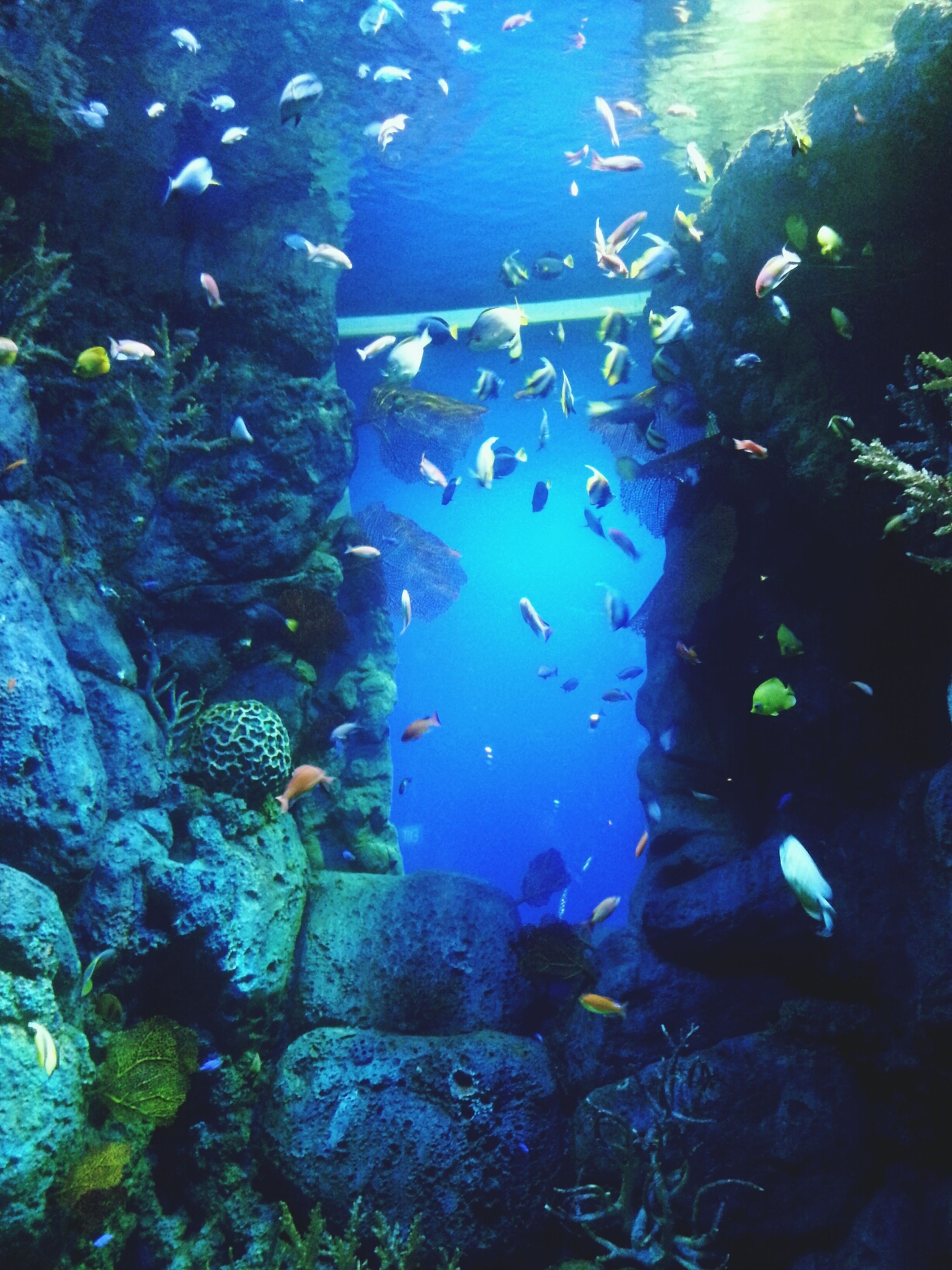 underwater, undersea, swimming, sea life, water, animal themes, fish, animals in the wild, wildlife, blue, sea, aquarium, rock - object, coral, nature, school of fish, transparent, animals in captivity, beauty in nature