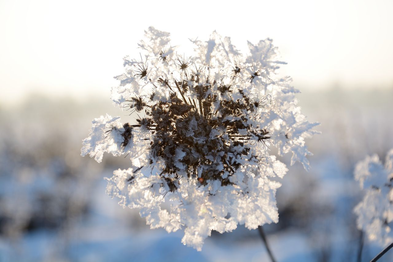 Beauty In Nature Close-up Cold Temperature Fragility Iceflower Nature No People Outdoors Snow Winter