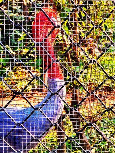 Sarus Crane Animal Animal Photography Animal Action Animal Beauty Animal In The Zoo Animal In The Cage Bird Bird Photography Bird Collection Bird Action Bird Beauty One Bird One Animal One Flamingo Flamingo In The Cage Flamingo Flamingo Photography Flamingo Beauty Flamingo At The Zoo Flamingo In The Zoo Flamingo Action Flamingo Collection