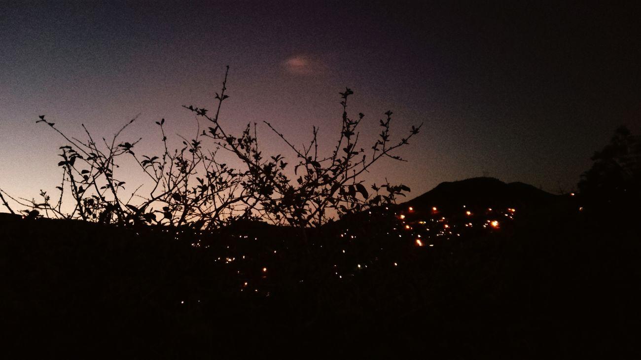 Honduras Sky Tree