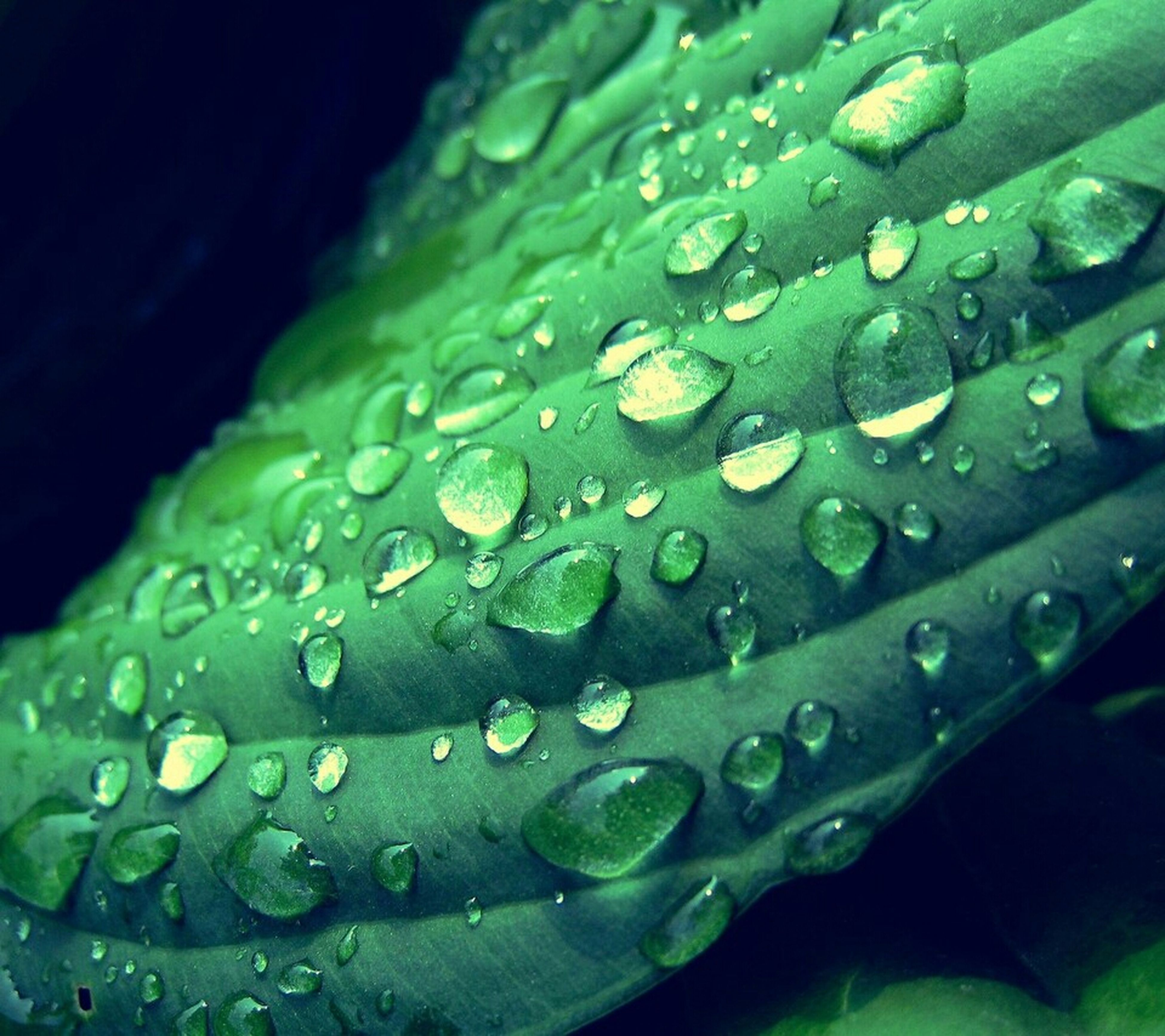 drop, water, freshness, leaf, wet, growth, fragility, close-up, beauty in nature, dew, green color, nature, plant, raindrop, flower, droplet, leaf vein, purity, rain, water drop