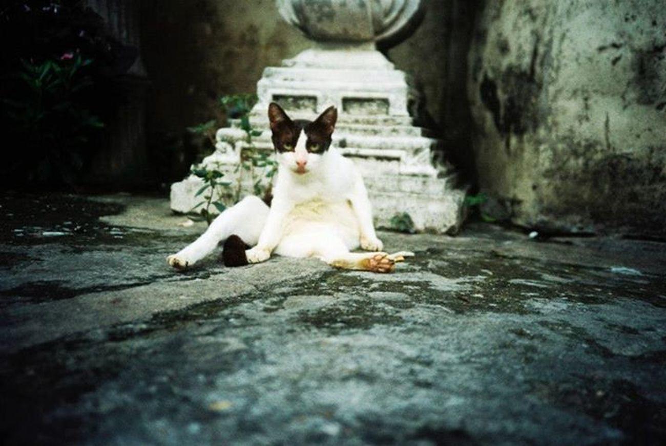 >< Cat Lomography Streetphotography Olympus_xa