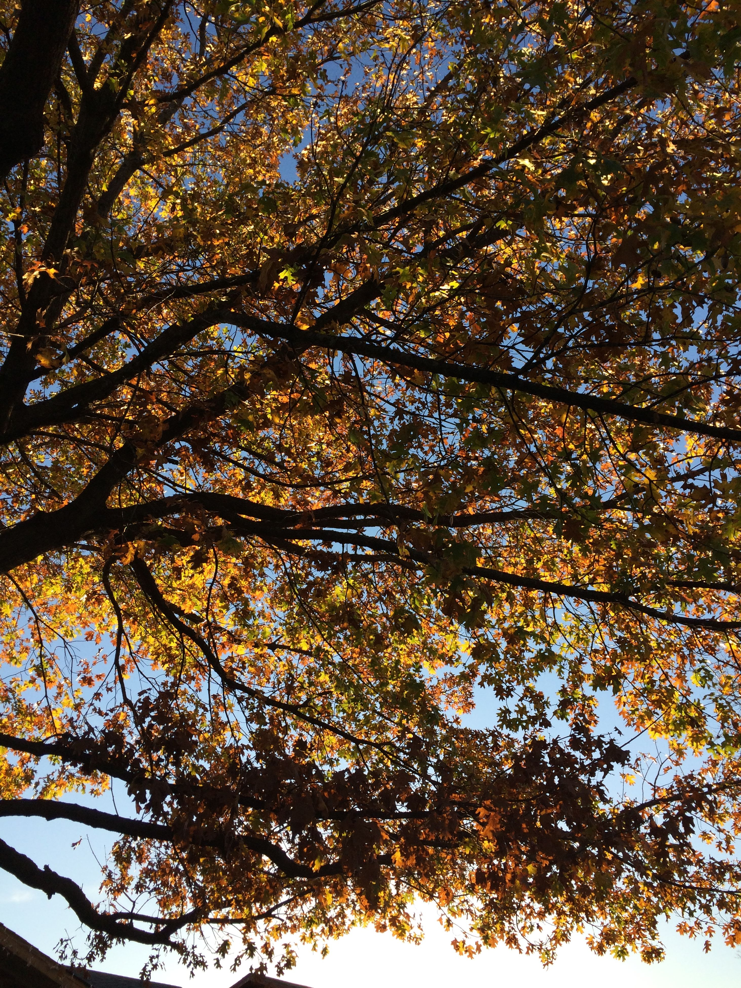 tree, low angle view, growth, branch, autumn, tranquility, nature, beauty in nature, change, scenics, forest, sky, tree trunk, tranquil scene, orange color, clear sky, day, season, outdoors, no people