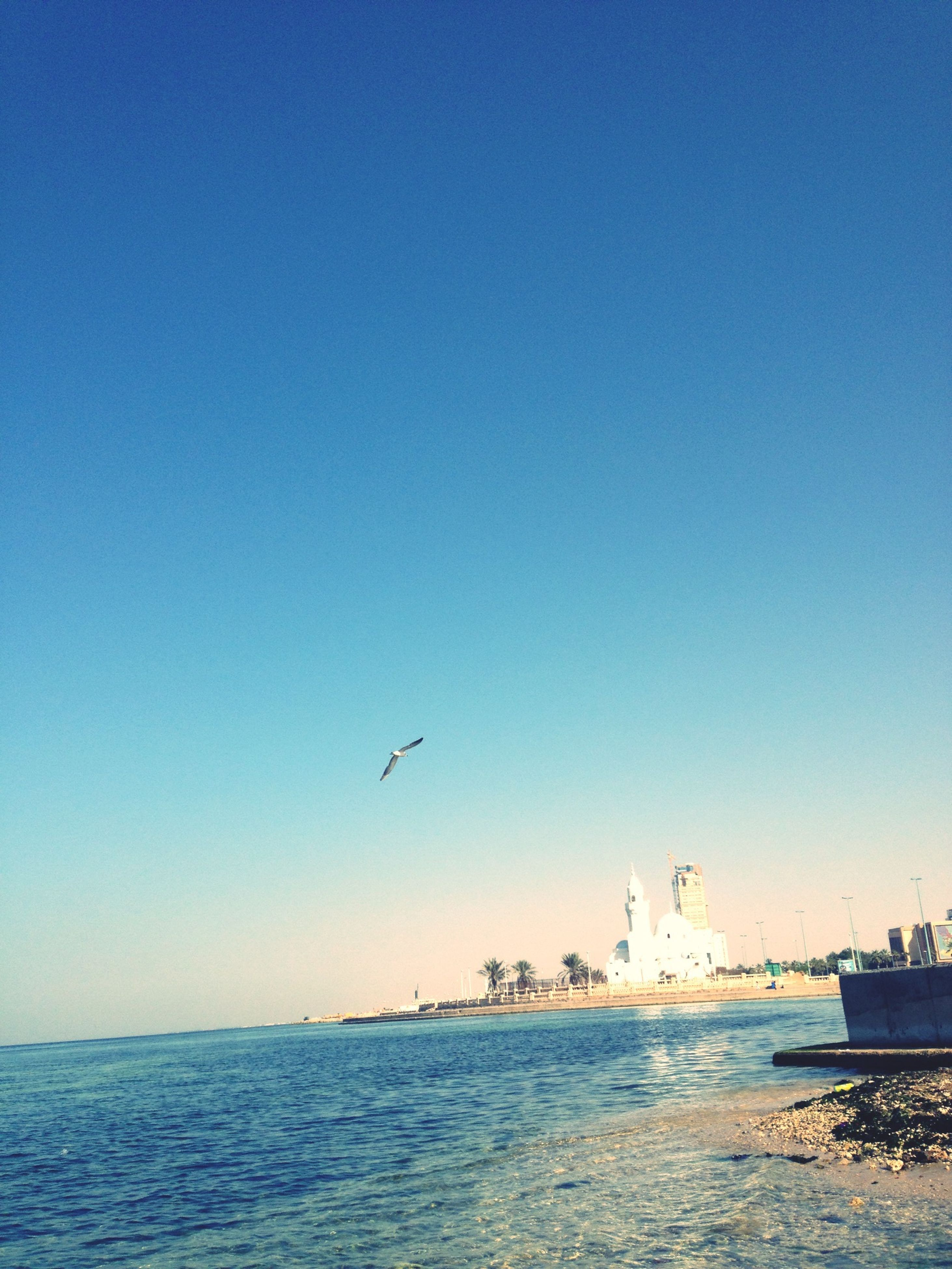clear sky, copy space, water, sea, bird, tranquil scene, tranquility, scenics, animal themes, flying, blue, beauty in nature, transportation, nature, animals in the wild, wildlife, day, outdoors, sky, idyllic