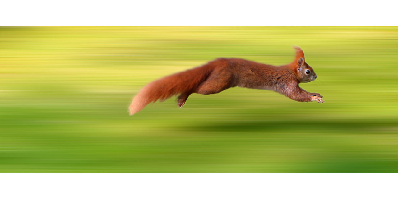 Animal Animal Themes Art ArtWork Close-up Design Eichhörnchen Green Motion Nature No People One Animal Outdoors Squirrel EyeEmNewHere