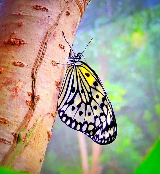 Beauty In Nature Butterfly - Insect Multi Colored Close-up 🌈⭐🌠🌍🌞 Check This Out 😊 EyeEm Best Shots