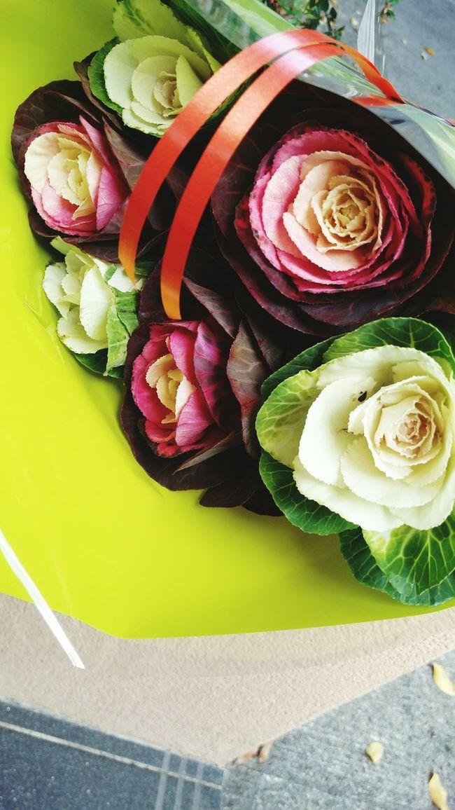 Surprise Gift Des Fleurs Plants 🌱 Picoftheday Helloworld Fall Beauty