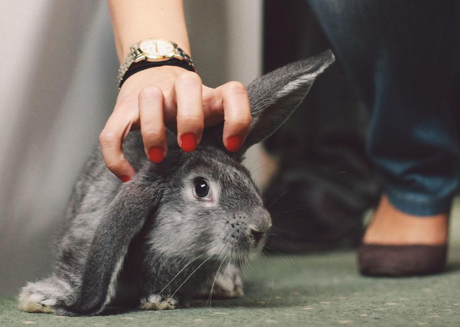 Beautiful stock photos of hasen, Animal Themes, Cluj-Napoca, Domestic Animals, Flooring