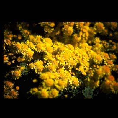 Flowers Flower Tagsforlikes Petal Petals Nature Beautiful Love Pretty Plants Blossom Sopretty Spring Summer Flowerstagram Flowersofinstagram Flowerstyles_gf Flowerslovers Flowerporn Botanical Floral Florals Insta_pick_blossom Flowermagic Instablooms bloom blooms botanical floweroftheday