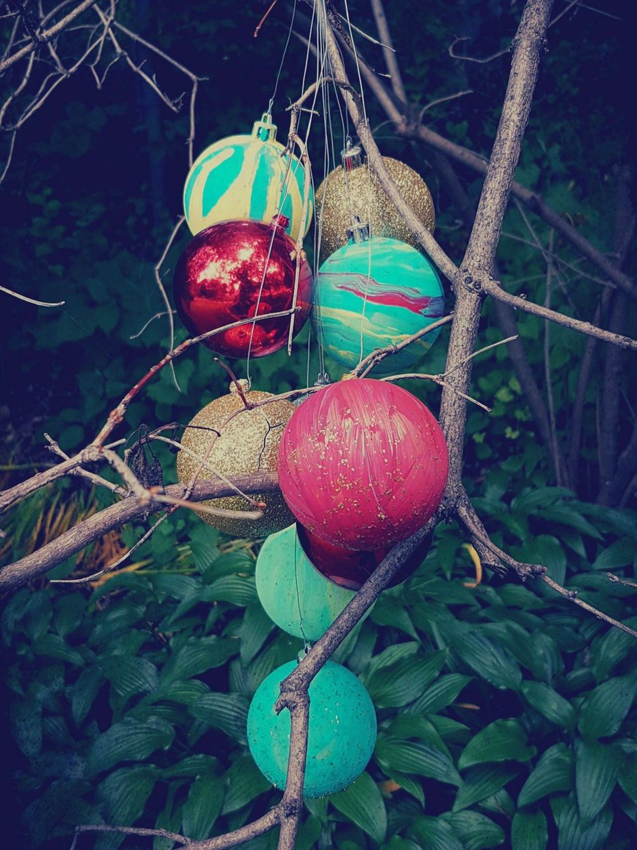Christmas in the forest??..l was wandering around looking at the trees, when something caught my eye...these beautiful painted Christmas balls were just hanging in a tree! ... Painted Christmas Balls Tree Hanging No People Summer Outdoors Close-up Nature PhotographyMobile Photography Eyeemphotography Eyeem Marketplace EyeEm Gallery EyeEm Team Getty Images Premium Collection EyeEm Best Shots - Nature The Week On EyeEm EyeEm Selects EyeEm Best Shots Beauty In Nature Plant Green Leaves Check This Out Macro Photography Eye4photography  Christmas Decorations Hanging