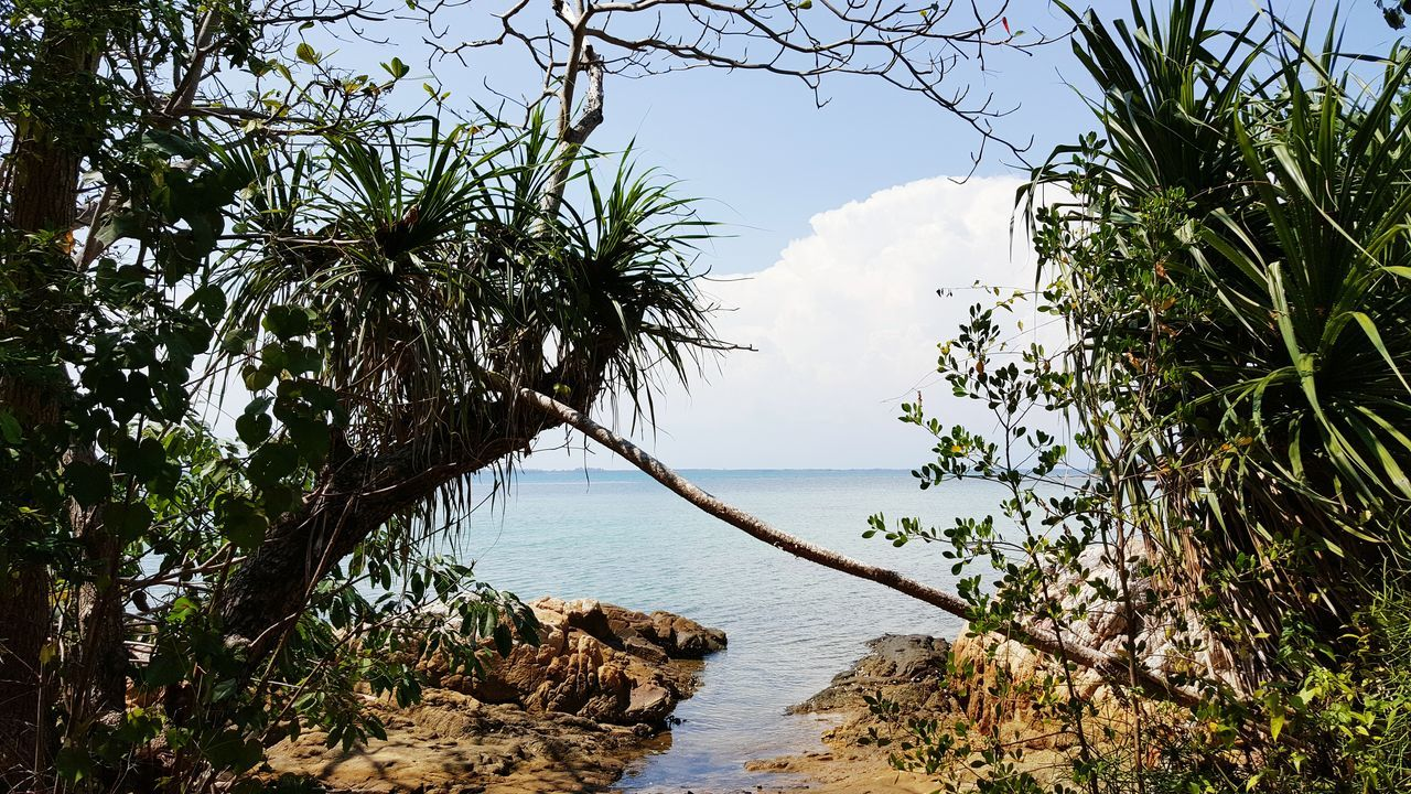 tree, sea, nature, growth, water, beauty in nature, tranquil scene, scenics, sky, tranquility, plant, horizon over water, outdoors, beach, no people, branch, day
