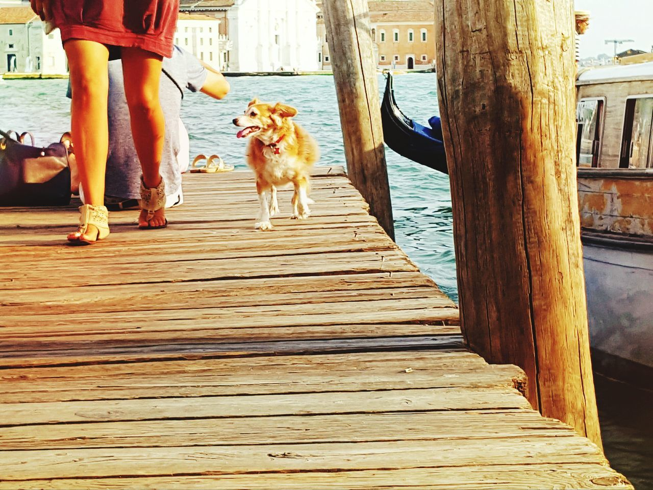 On The Bridge Photography In Motion People Of The Oceans People Dog Goldenretriever People And Dog Seascape Sealife Lifestyles Life In Motion Life Is A Journey Colour Of Life Feel The Moments Capture The Moment Venice, Italy Feeling Freedom Telling Stories Differently Summer Views Learn & Shoot: Simplicity People Together Boat Dock People And Places