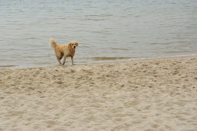 Taking Photos Enjoying Life Dog On The Beach Dog