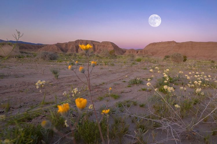Desert moonrise Heat Summer Backpacking Hiking Adventure Travel West Coast Hot California Moonrise Full Moon Wildflower Nature Landscape Tranquil Scene Desert Beauty In Nature Scenics EyeEmNewHere Tranquility Moon Outdoors No People Arid Climate Mountain Plant Day Sky Tree Flower