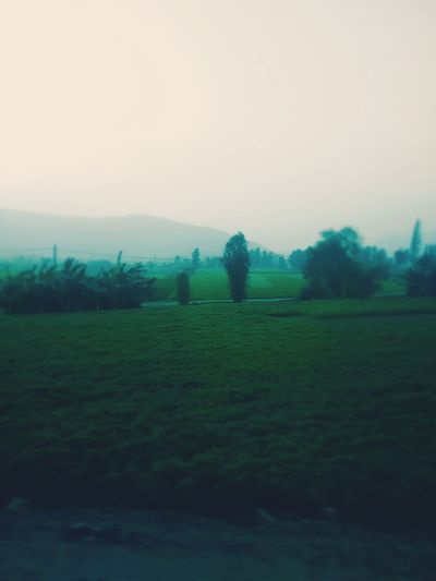Traveling Photographer Cellphone Photography Green Green Green!  Green Color GREENATURE Nature Photography Nature_collection Moments Afternoon