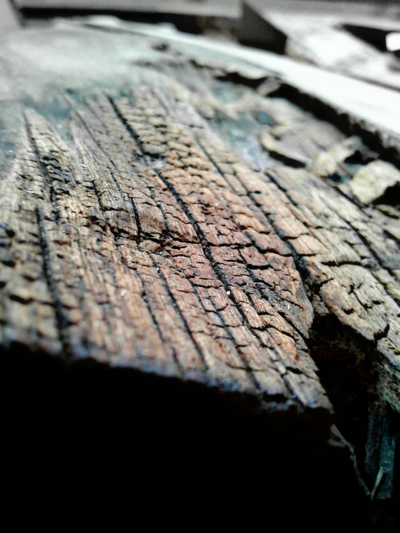 Wood - Material Selective Focus Textured  Plank Surface Level Wooden Close-up Cracked Weathered Tree Trunk Nature Day No People Non-urban Scene Tronco Madera Wood