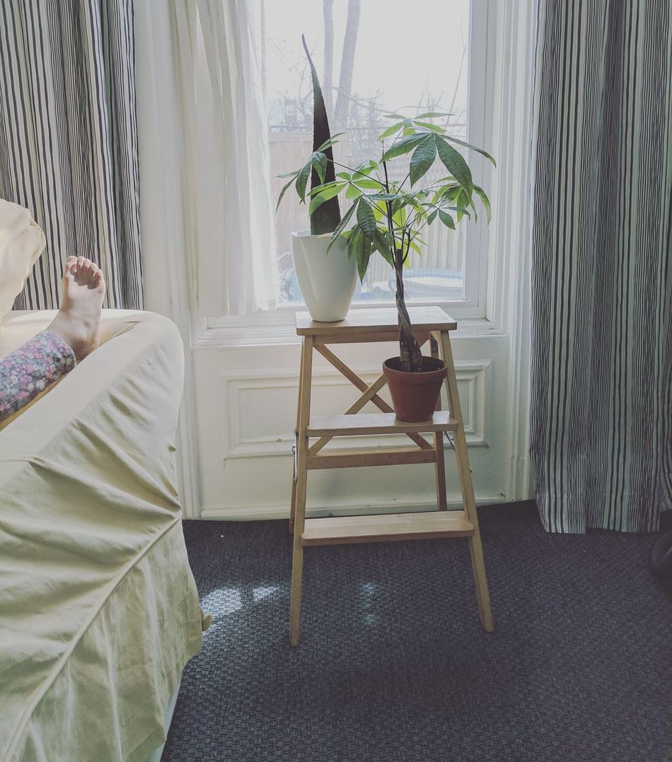 Plant Chair Window Table Home Interior Curtain Indoors  No People Nature Day Home Showcase Interior Water Greenhouse