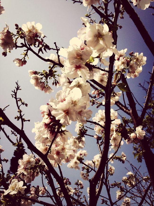 銷聲匿跡的,我的花,讓我自己綻開。