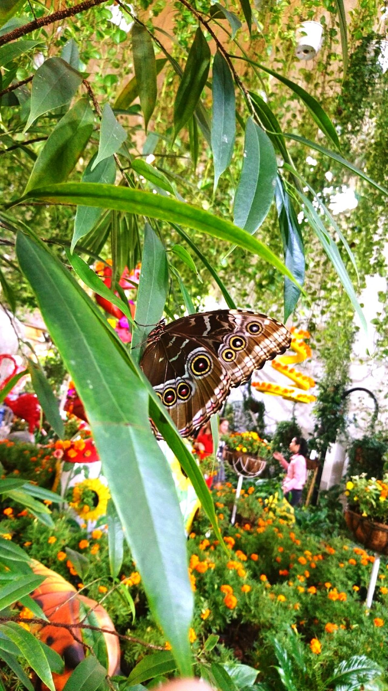 Beautiful Butterfly One Insect Nature Plant Animals In The Wild Beauty In Nature Outdoors Day Flower EyeEmNewHere Brown Color Textured  Butterfly ❤ On A Tree Freshness Pattern The Great Outdoors - 2017 EyeEm Awards EyeEmNewHere BYOPaper!
