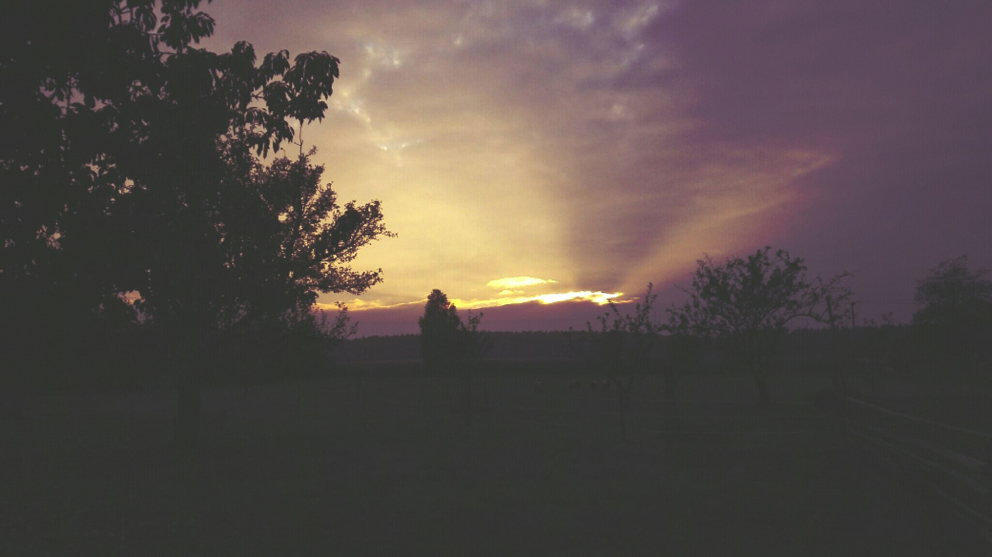 silhouette, sunset, sky, tree, tranquility, tranquil scene, cloud - sky, scenics, beauty in nature, landscape, nature, dark, dusk, cloudy, cloud, idyllic, dramatic sky, field, outline, outdoors
