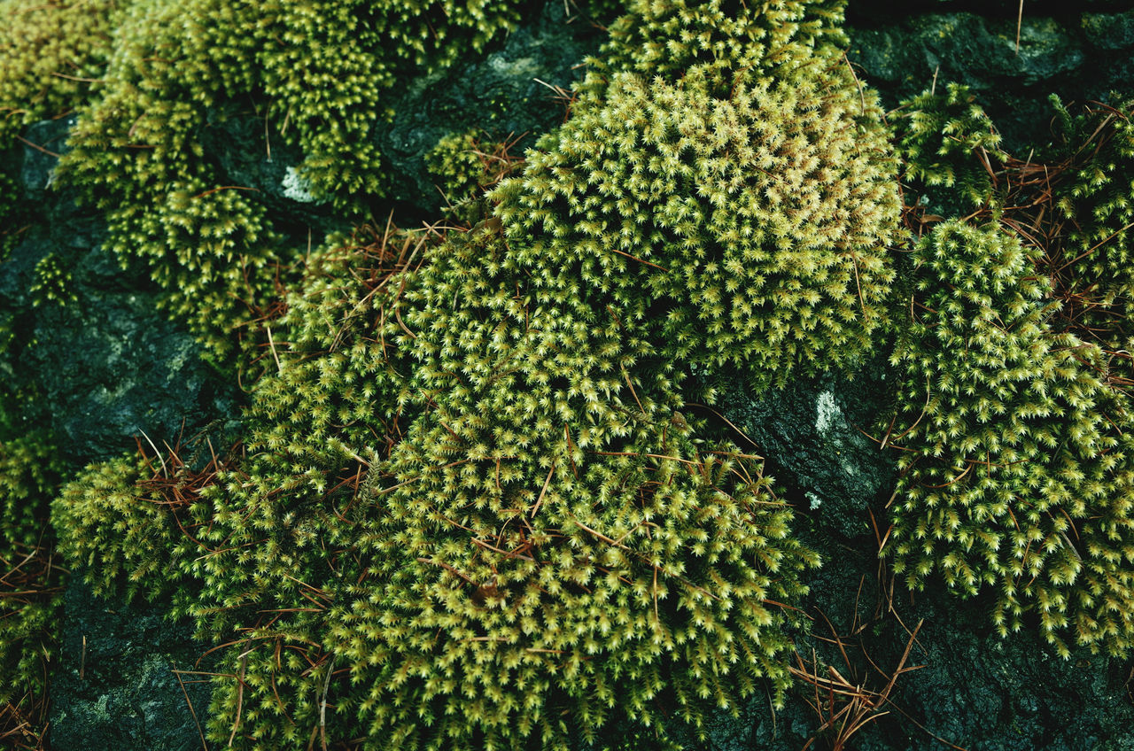 Beauty In Nature Close Up Close Up Nature Close-up Forest Freshness Full Frame Green Color Growth Moss Mossporn Nature Nature Pattern Pattern Pieces Patterns Patterns In Nature Remote Location Rocks Rural Spring Moss & Lichen Vegetation Vegetation Textures Moss Close Up