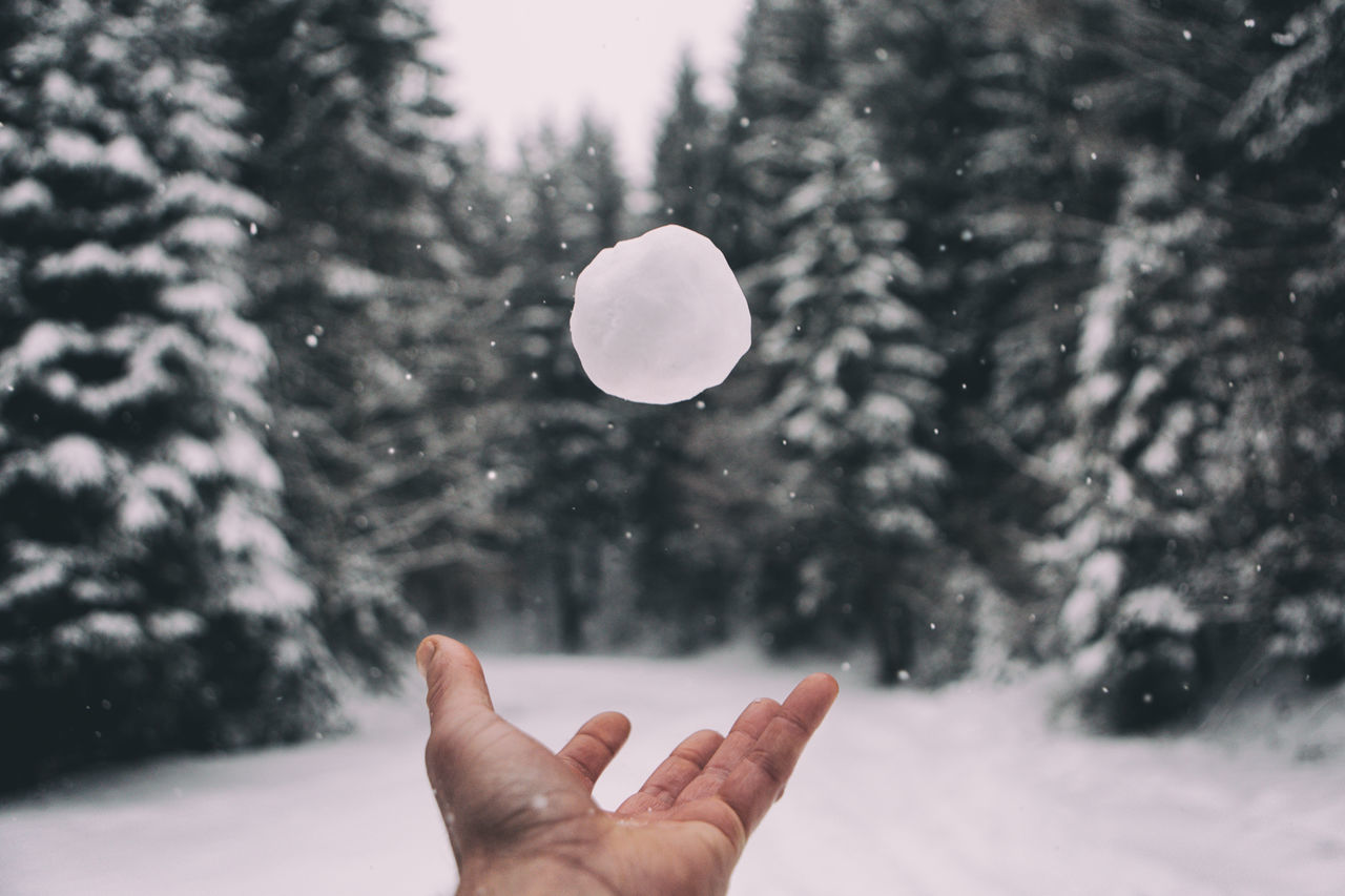 Beautiful stock photos of winter,  Adult,  Adults Only,  Close-Up,  Cold Temperature
