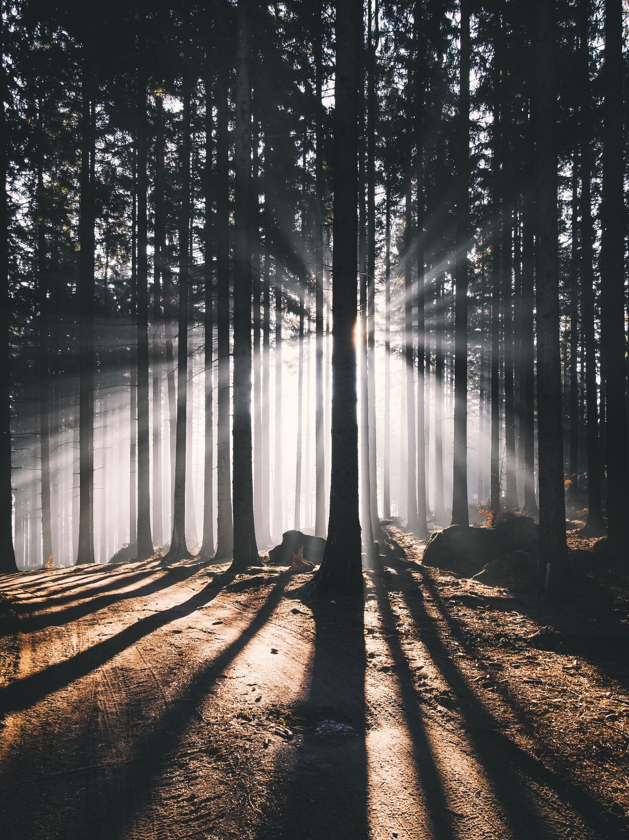 Tree Forest Nature Morning Tranquil Scene Beauty In Nature Scenics Outdoors Tranquility Tree Trunk Environment Non-urban Scene Lake Landscape Fog Day No People