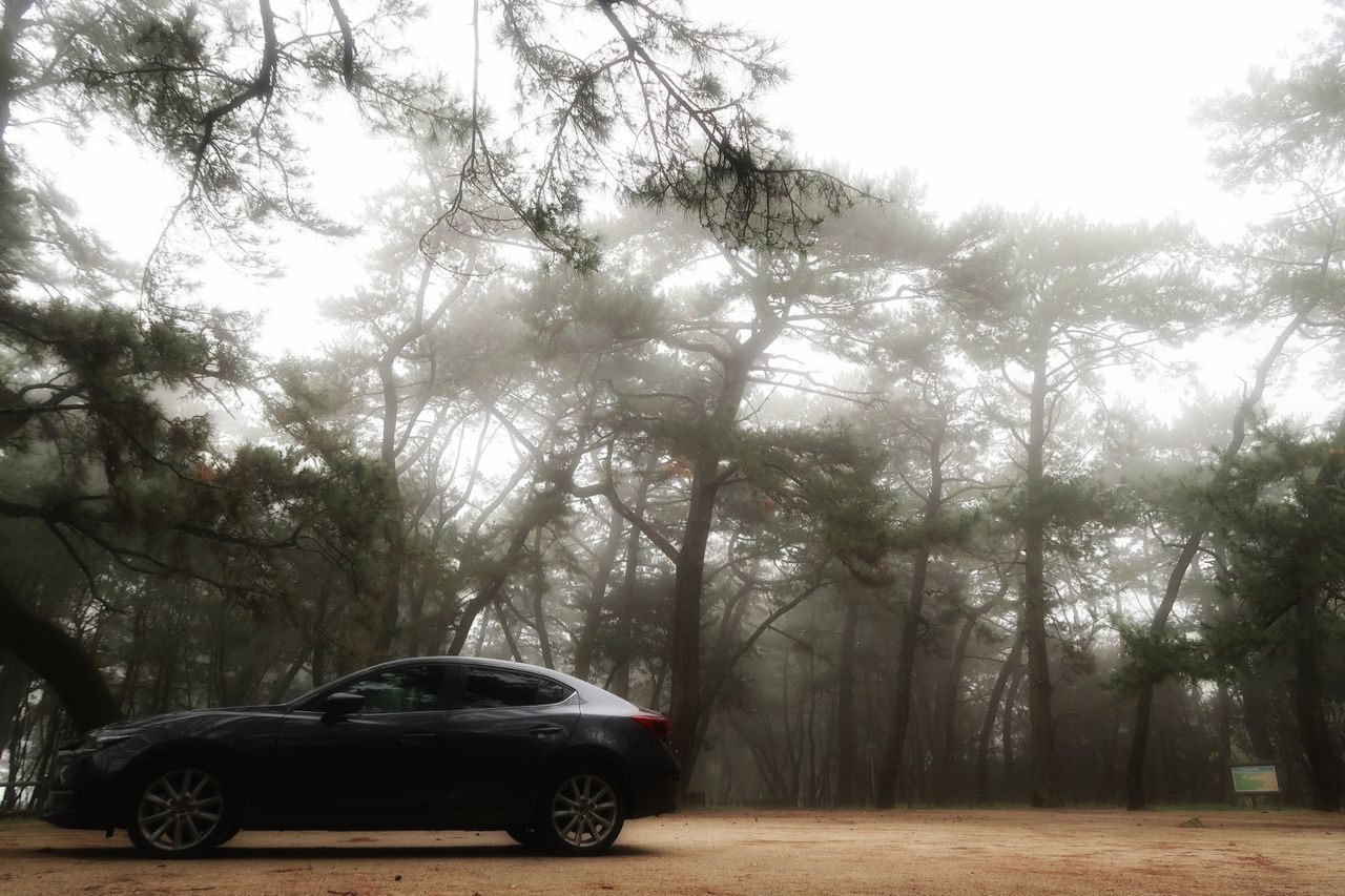 唐津 虹の松原 松林 砂浜 霧 雨上がり 木 マツダ アクセラ Tree Forest Pine Trees Beach Fog Rainy Days Cloudy Day Mazda MaZda3 Car Driving Road Nature Beauty In Nature Springtime Leaf