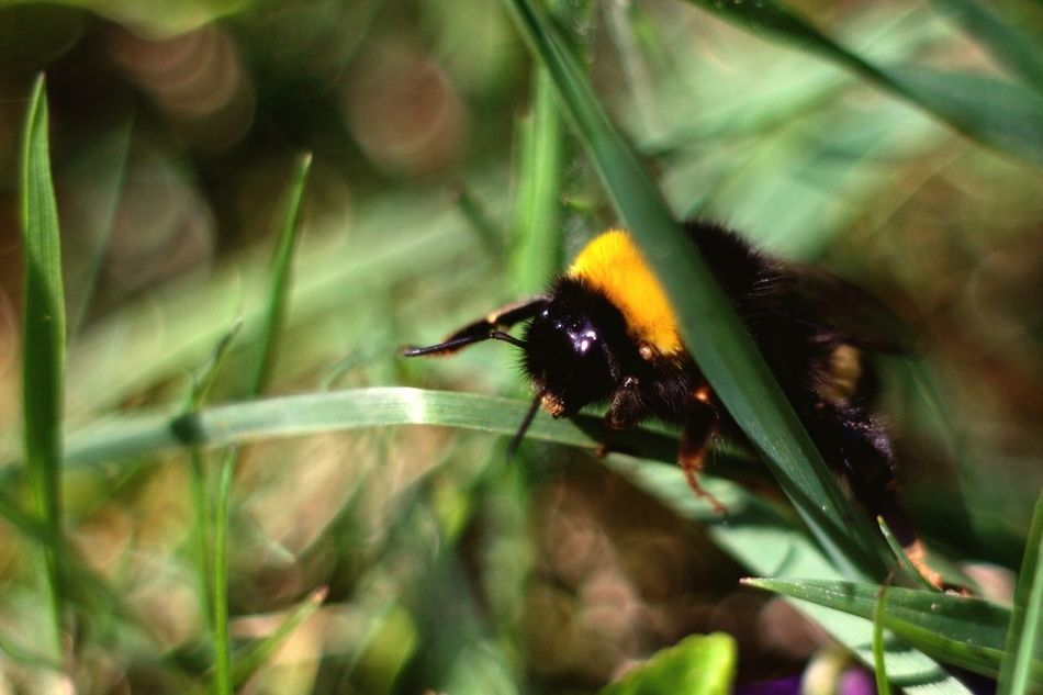 Beautiful stock photos of bee, , Animal Behavior, Animal Themes, Animals In The Wild