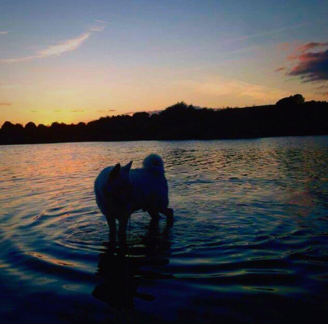 Simba ❤️ Tranquil Scene Sunset Water Animal Themes One Animal Dog Cute Pets Lake Animals Nature Animal Photography Domestic Animals Sky Animal Love Mammal Akita Pets Beauty In Nature No People Day