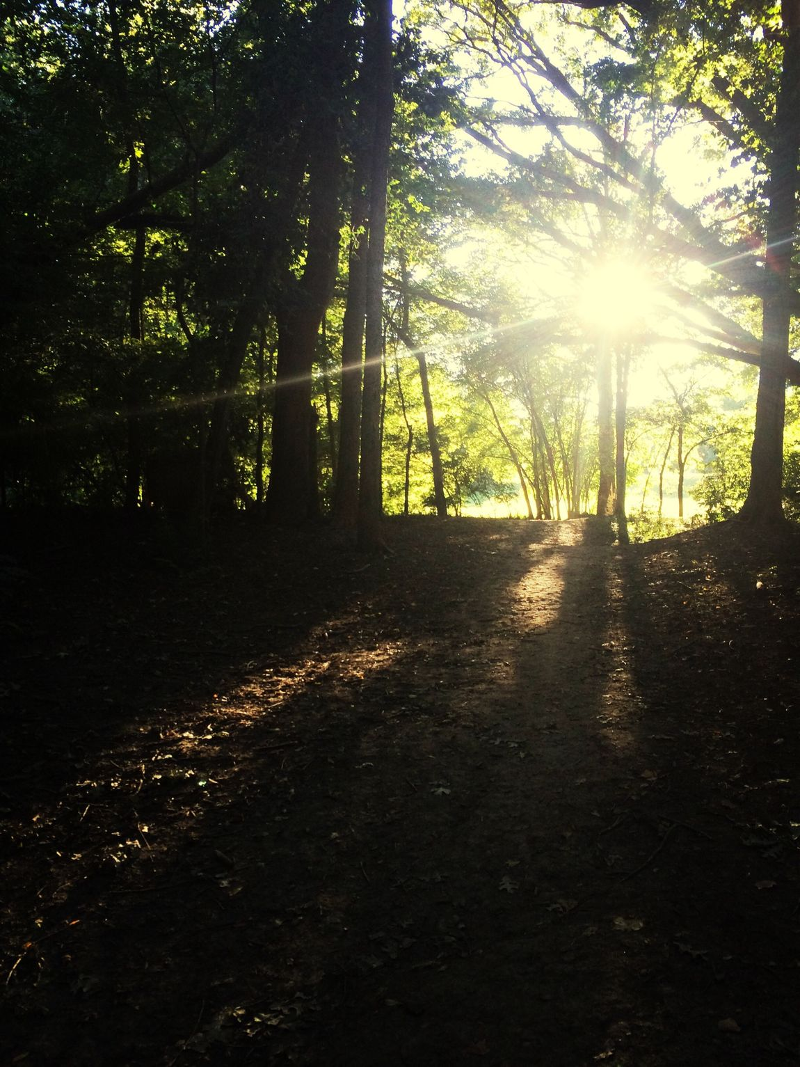 Autumn Light And Shadow Lovelife Hiking Trail