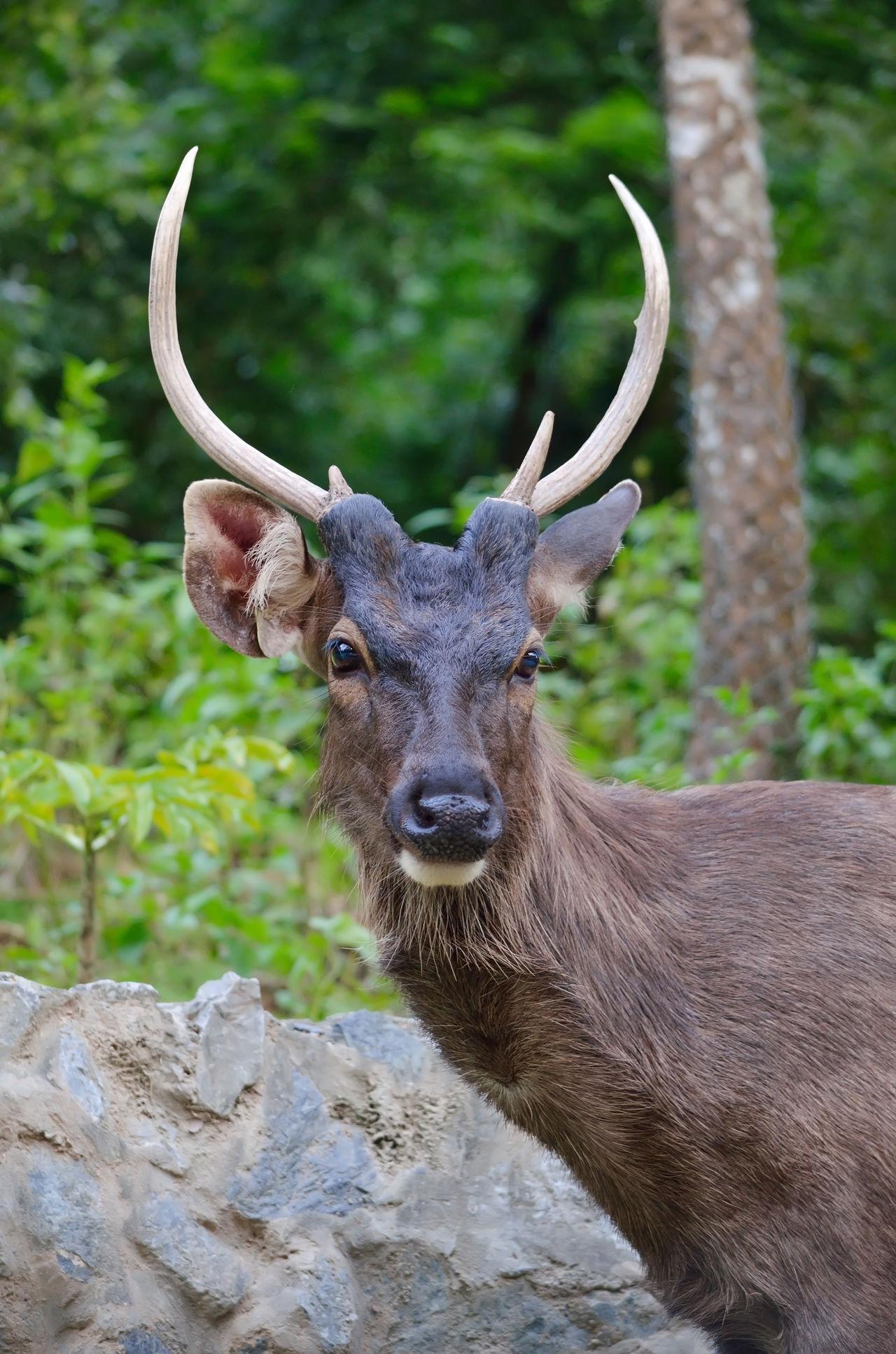 Beautiful stock photos of hirsch, Animal Themes, Animal Wildlife, Animals In The Wild, Day