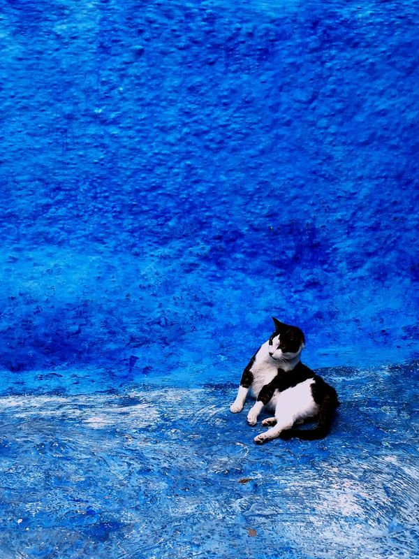 What's On The Roll 蓝色 Bleu Blue Rabat Morocco Maroc Oudaya Cat Chat 猫 蓝色小镇