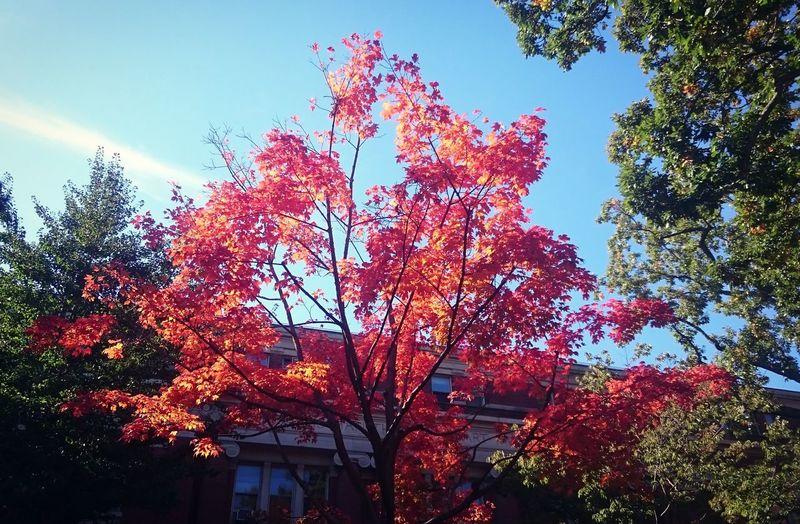 Autumn Autumn Leaves Autumn Colors Fall Fall Beauty Fall Colors Havard Boston Travel New England
