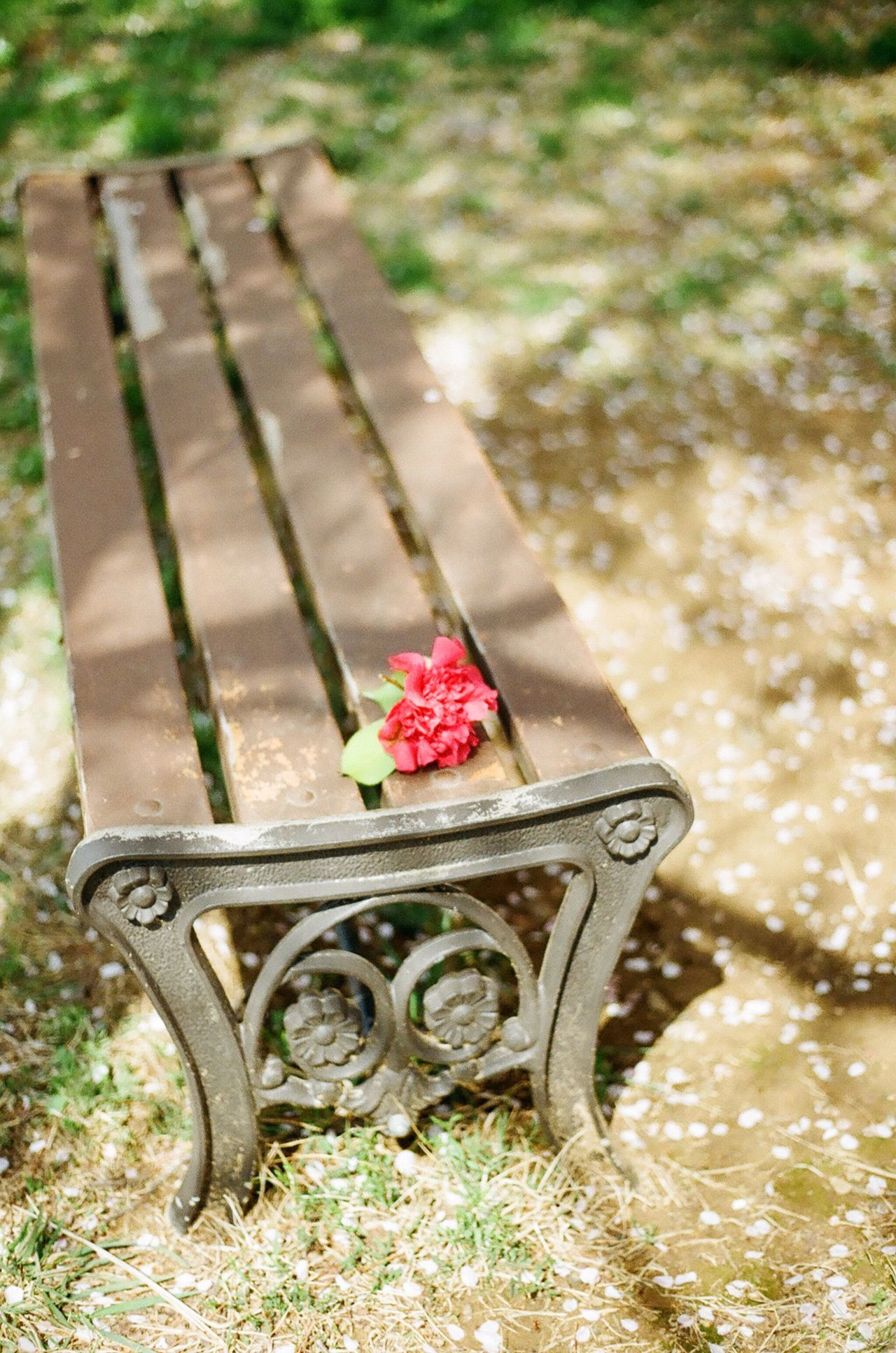 Film Photography Filmisnotdead Analogue Photography Daylight Bench Springtime No People Wood - Material Outdoors Nature Day Red Flower Close-up