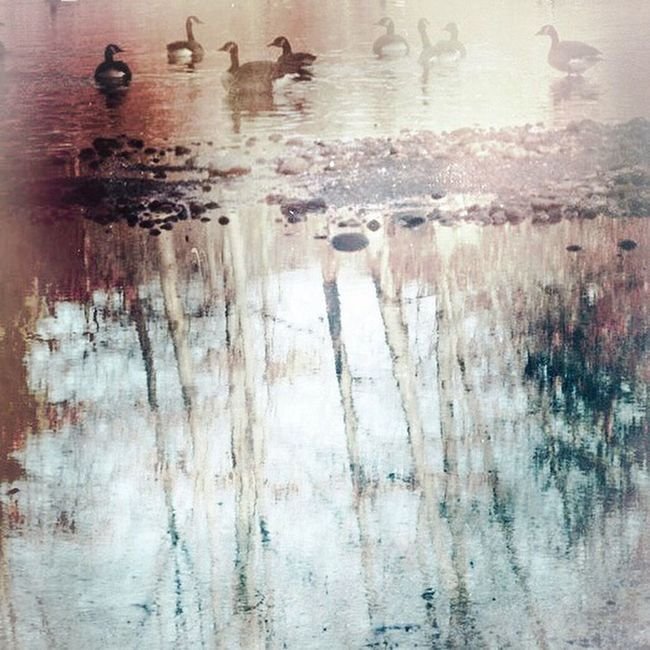 Birds Wildlife Water Reflections Nature Landscape_Collection Rural Scenes Digital Painting