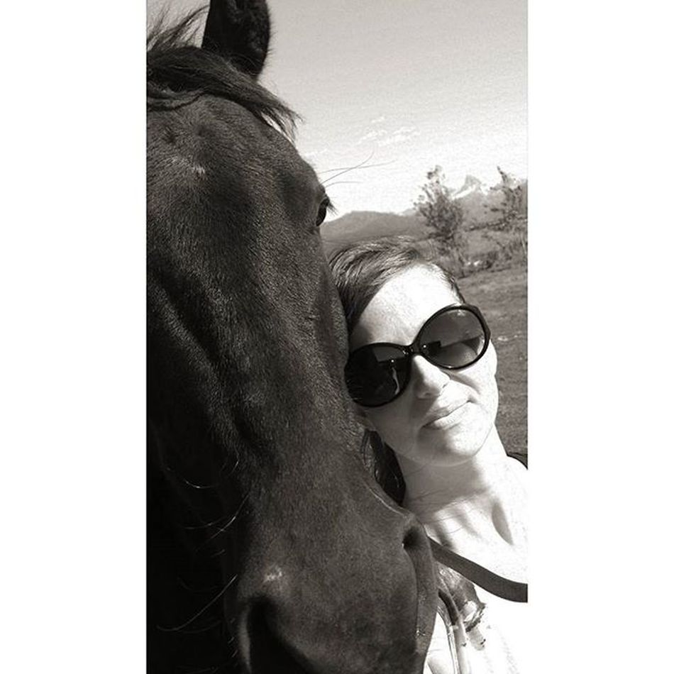 Bravo. Tetonvalley Tetons Morgans Horsesofinstagram Horselove Cowgirl Farmlife Bw CountryLivinG Shescountry Shades