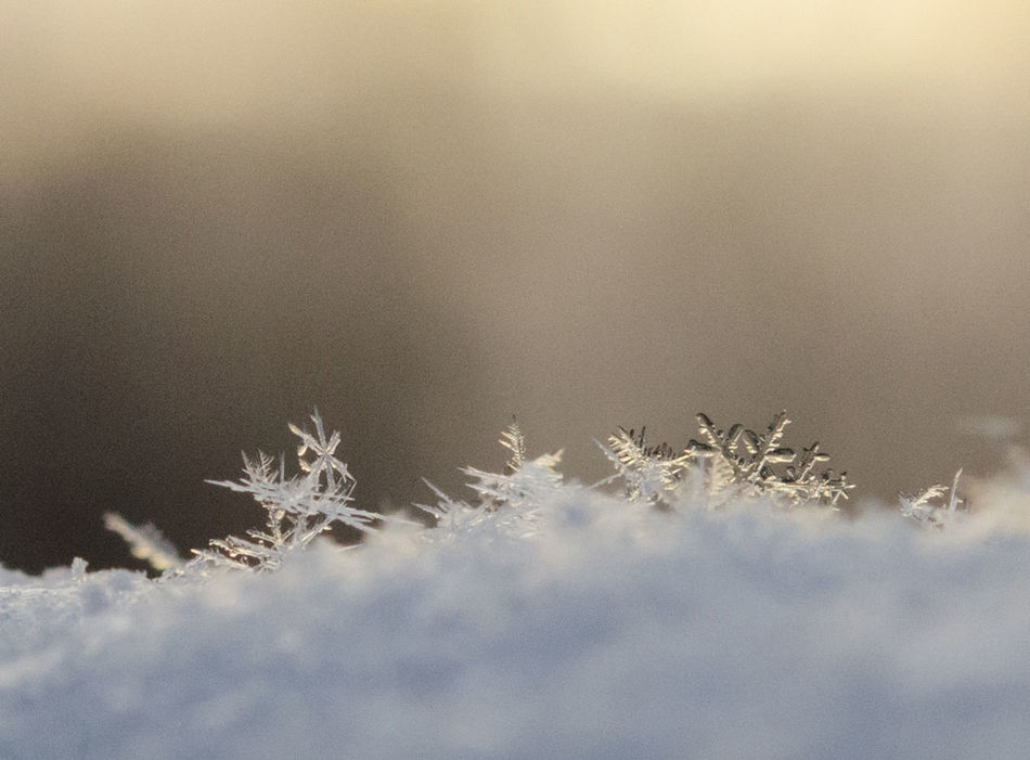 Beautiful stock photos of snowflake, Beauty In Nature, Close-Up, Cold Temperature, Frozen