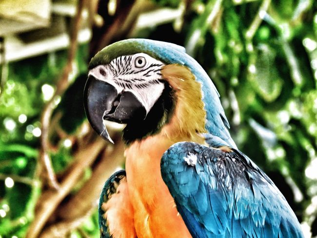 Bird Blue Macaw Parrot Colour Of Life