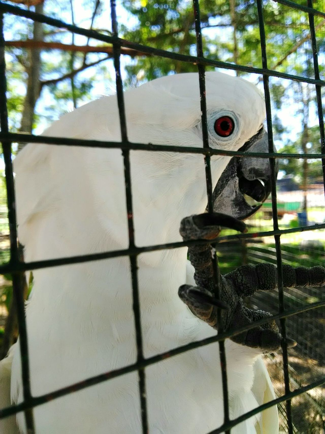 Eyeem Philippines EyeemPhilippines Mobilephotography The Great Outdoors - 2017 EyeEm Awards Day No People Metal Grate Indoors  Sky Close-up Prison Bird Animal Themes Animal Wildlife