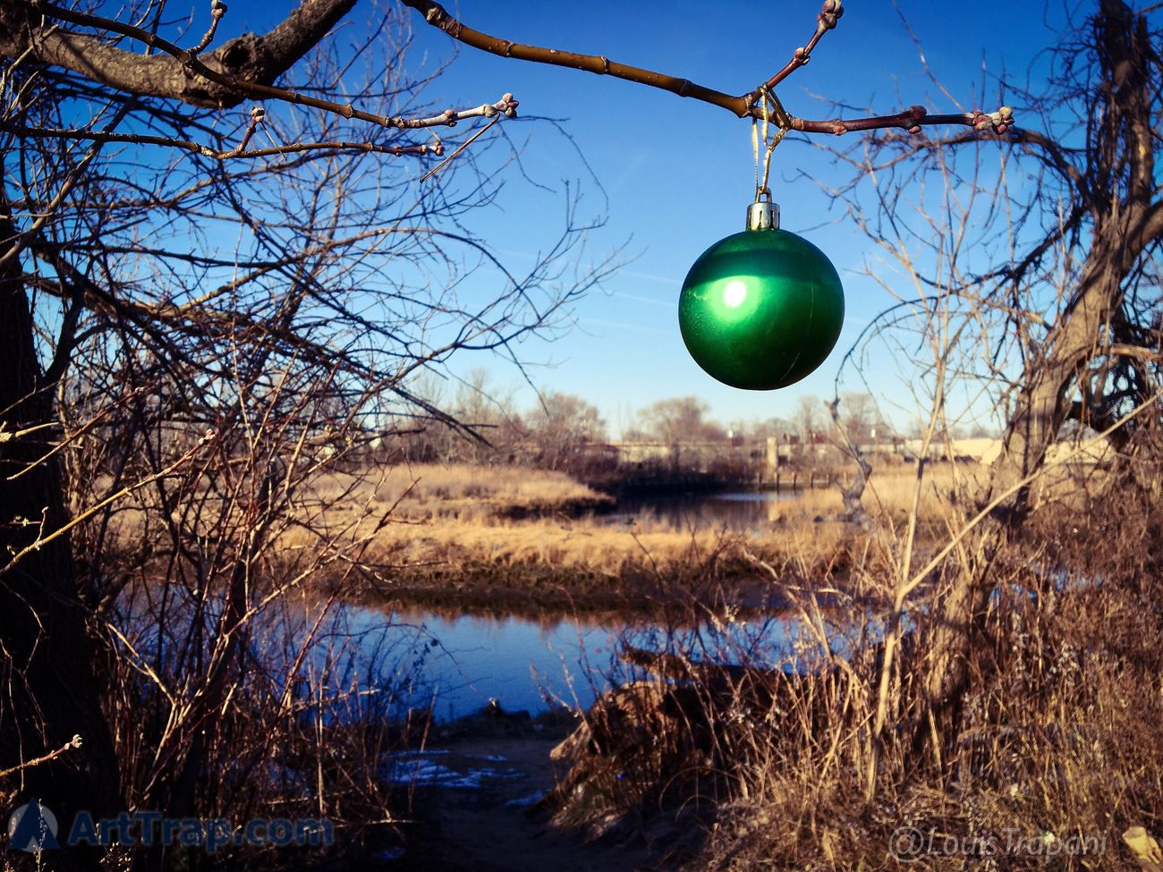 A little leftover holiday cheer discovered on my walk today. IPhoneography Ornaments