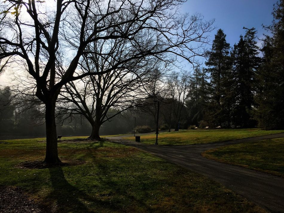 My favorite place of peace at the moment California Landscape Winter Ucdavis Tree Tranquility Beauty In Nature