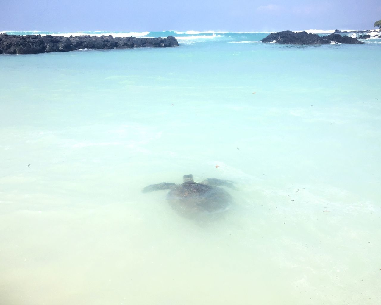 Sea Turtle Turtle Sea Water Nature Sky No People Scenics Underwater Day Outdoors Animal Themes Beauty In Nature UnderSea