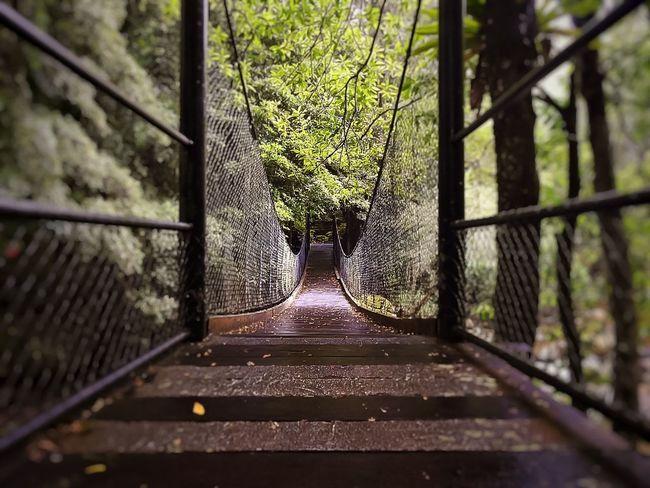 Suspension Bridge Australia Nikon P900 EyeEm Best Edits Taking Photos Nikonphotography EyeEmBestEdits EyeEm Best Shots