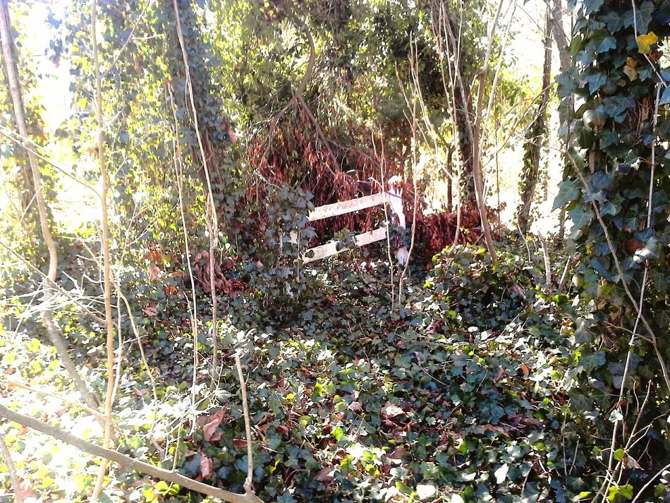 Gates Fences IvyandOak Garden Park Enjoying The Sun A Walk In The Woods Urban Landscape EyeEm Nature Lover